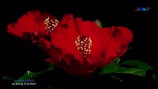 موسیقی رمانتیک، GIOVANNI MARRADI - You Belong To My Heart