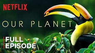 جنگل ها - از سری مستند های سیاره ما