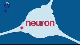 عملکرد مغز در بدن انسان