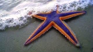جانوران عجیب دریایی