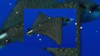 زیباترین موجودات دریایی