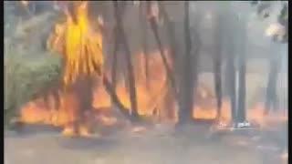 آتش سوزی در نخلستان شهر کتیج