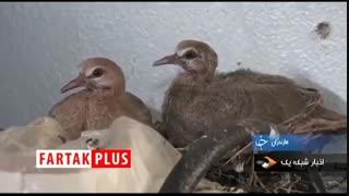 ماجرای جالب پرندههایی که پسری را مجبور کردند تا پایش در کفش پدر بگذارد