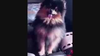 یونتان سگ وی عضو bts