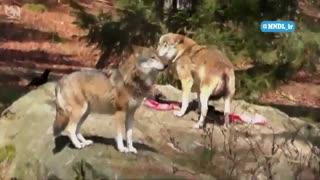 حیات وحش کوه های راکی - قسمت 5