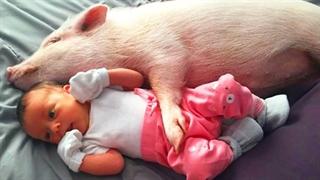 بازی کودکان با خوک بامزه برای سرگرمی