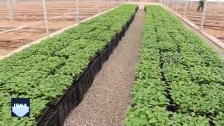 صادرات ۷۵ درصدی در بزرگترین مجموعه گلخانهای ایران